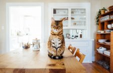A Cat's Tips for Staying Home